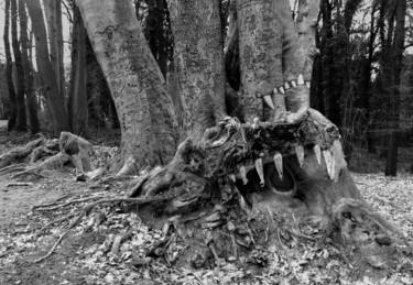 Les dents de la forêt